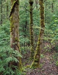 TreeGroupAfterRain-Tremont_vertical-7001740-003.jpg