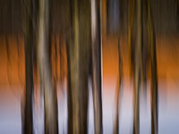 aspen-trees-mormon-row-abstract-jackson-hole-wyoming-grand-tetons-ae.jpg