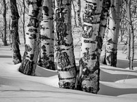 aspen-trees-snow-jackson-hole-wyoming-grand-tetons-ae.jpg