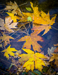yosemite-aspen-fall-leaves-merced-river-california-ae.jpg