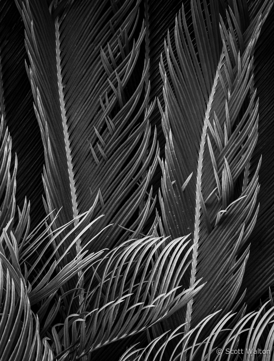king-sego-palm-detail-niceville-florida.jpg