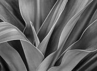 botanical-detail-orlando-florida.jpg