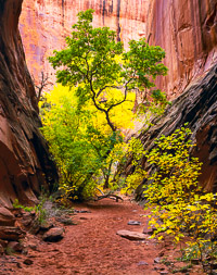 sheltered-life-long-canyon-utah.jpg