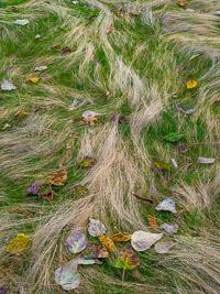 Grass-and-Leaves-Fall-lg-Yosemite-California.jpg