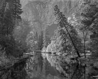 YosemiteValleyMercedLeaningTreeBW-2.jpg