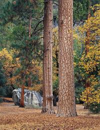 bridwell-boulder-ponderosa-forest-camp4-yosemite-california-v4-2.jpg