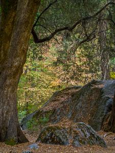 fall-forest-rock-ahwahnee-vertical-yosemite-california-Edit.jpg