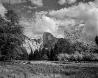 half-dome-cooks-meadow-elm-tree-yosemite-california.jpg