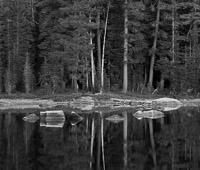 high-sierra-pond-detail-yosemite-national-park-california.jpg