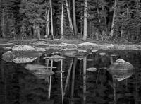 high-sierra-pond-forest-yosemite-national-park-california.jpg