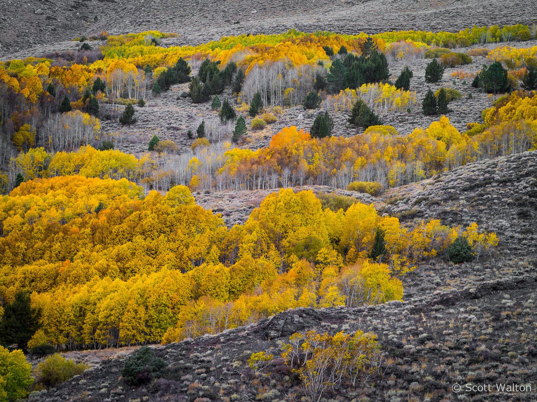aspen-hillside-color-june-lake-loop-california.jpg