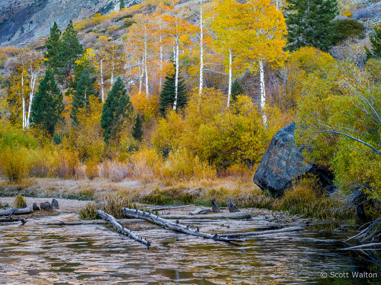 aspen-ice-pond-logs-lundy-canyon-california.jpg