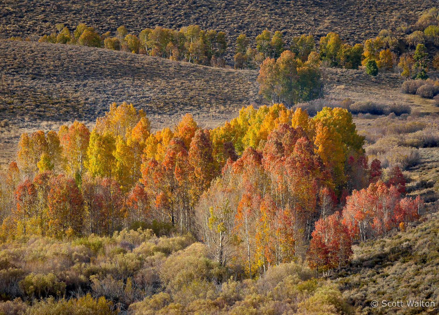 fall-color-conway-summit-eastern-sierra-california.jpg
