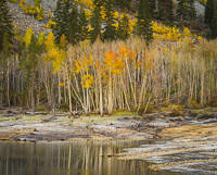 aspen-autumn-lake-detail-dawn-lundy-canyon-california.jpg
