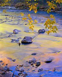 reflections-fall-color-virgin-river-sinawava-zion-national-park-utah-v2.jpg