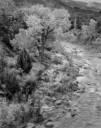 Virgin river and cottonwood