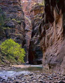 virgin-river-green-foliage-the-narrows-zion-national-park-utah-v2.jpg