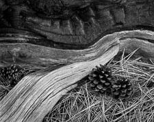 Log-Pinecones-BoulderMTN-BW-homescan.jpg