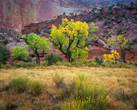 canyon-rain-fall-color-capitol-reef-national-park-utah.jpg