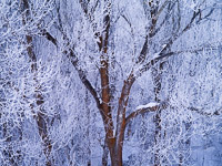 frost-covered-tree-grand-teton-national-park-wyoming.jpg