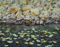 Isa-Lake-Lily-Pads-Boulders-Yellowstone-national-park-wyoming.jpg