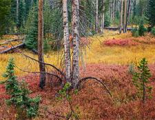 fall-forest-rain-yellowstone-national-park-wyoming-v2.jpg