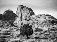 round-tree-monument-valley-navajo-tribal-park-arizona.jpg