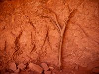 wall-branch-monument-valley-navajo-tribal-park-arizona.jpg