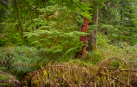 forest-detail-olympic-national-park-washington.jpg