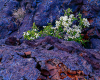 lava-flowers-craters-of-the-moon-national-monument-idaho.jpg