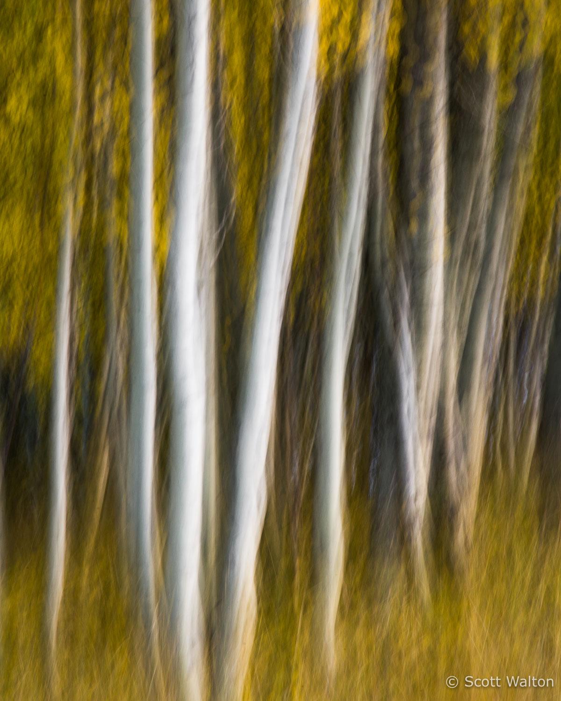 aspen-blur-rush-creek-eastern-sierra-california.jpg