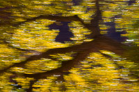 cottonwood-motion-blur-zion-national-park-utah.jpg