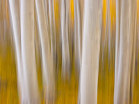 motion-blur-abstract-impression_1080448.jpg