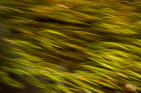 motion-blur-abstract-impression_DSC4382.jpg