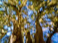 motion-blur-abstract-impression_IGP0194.jpg
