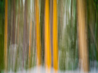 motion-blur-abstract-impression_IGP1377.jpg