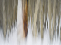 motion-blur-abstract-impression_IGP1887.jpg