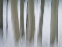 motion-blur-abstract-impression_IGP1907.jpg