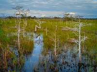 bent-dwarf-cypress-horiz-color-everglades-national-park-florida.jpg