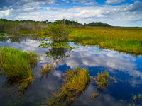 grasses-reflections-everglades-national-park-florida.jpg