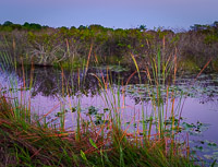 reeds-dawn-everglades-national-park-florida.jpg