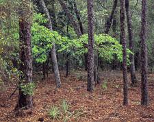 Hwy-85-Spring-Foliage-Okaloosa-County-Eglin-Reservation.jpg