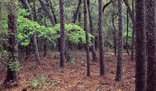 Hwy-85-Spring-Foliage-pano-Okaloosa-County-Eglin-Reservation.jpg
