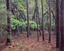 Hwy-85-Spring-Foliage-wider-Okaloosa-County-Eglin-Reservation.jpg