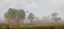 northwest_florida_sunrise_fog_eglin_reservation_Z2A6279.jpg